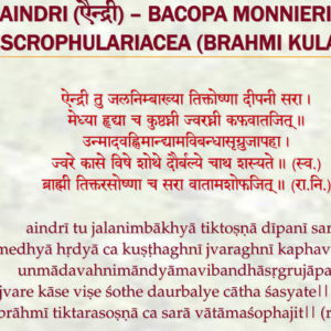 Aindri - Learn About the Brain-Nourishing Ability of Bacopa Monnieri (Jal Brahmi)