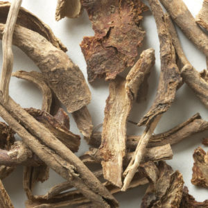 Bharangi - Learn About A Divine Herb For Lungs and Vocal Chords