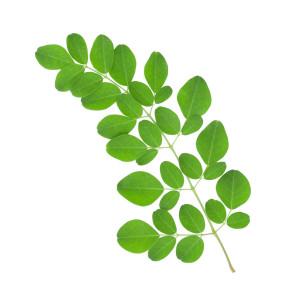 Moringa Leaves for detox and Nourishment