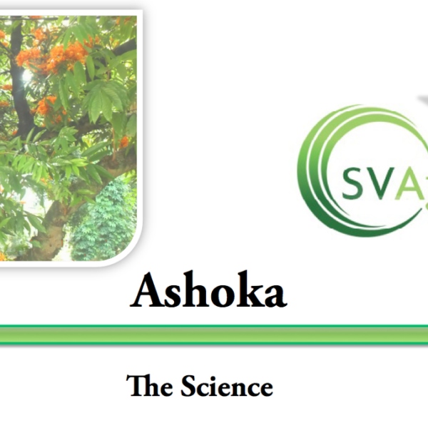 SVA Cafe #5 Ashoka; A Divine herb for removing grief Audio and PDF August 21 2014-258